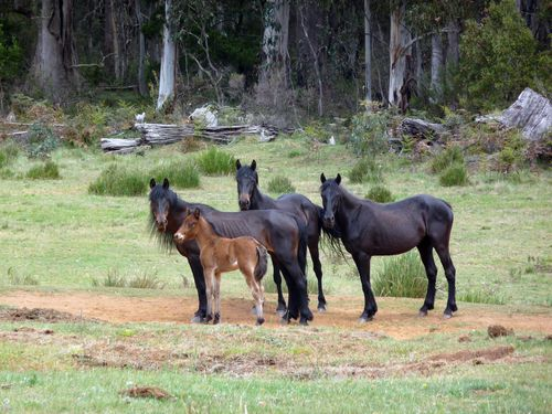 Mr Cochran's company charges $2000 for a five-day trip through the Kosciuszko National Park. Picture: AAP