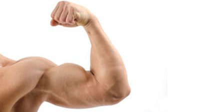Does training one bicep grow the other?