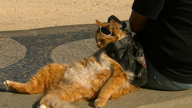 The Copacabana Bikie Cat