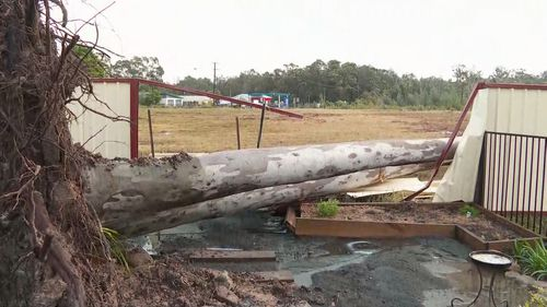 A tree down at Sanctuary Point, NSW.