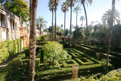 <strong>The Water Gardens of&nbsp;Dorne</strong>