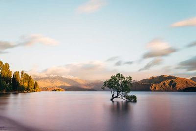 <strong>That Wanaka tree</strong>