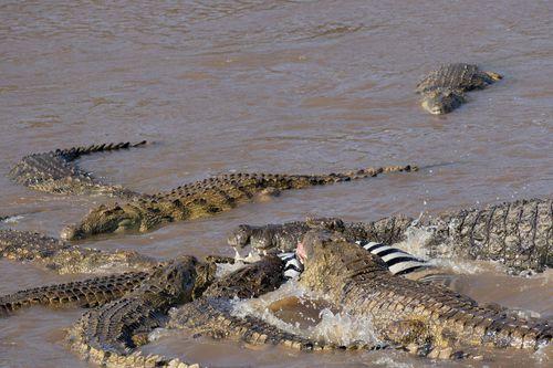 The area is a breeding ground for Nile crocodiles.