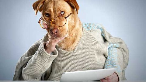 Dog wearing sweater and glasses reading newspaper.