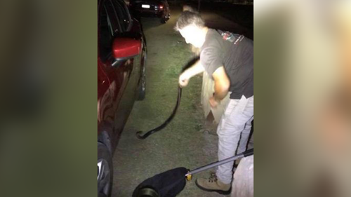 It took more than an hour for the snake catcher to remove the venomous snake. (9NEWS)