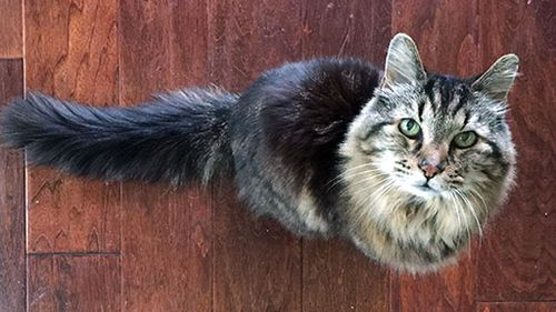 Say hello to Corduroy – officially the oldest cat in the world