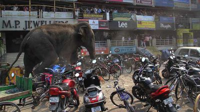 The elephant trampling motorcycles in the centre of the city. (AP)