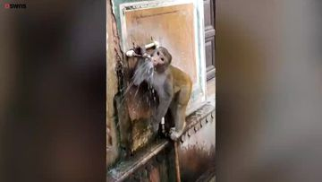 India applauds environmentally-friendly monkey