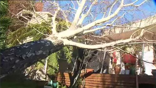 The Victorian SES received 800 calls for help yesterday and overnight, mainly for fallen trees. Picture: 9NEWS.