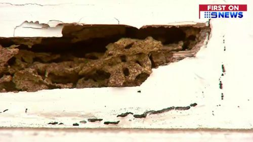 The primary school is riddled by termites. (9NEWS)