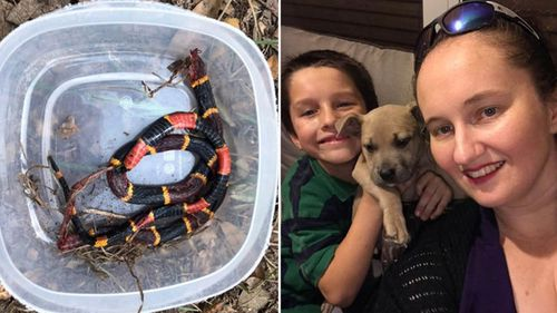 A deadly coral snake was close to the Richardson children in their Florida back yard.