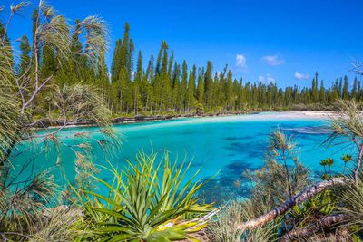 L'Ile des Pins (Isle of Pines)
