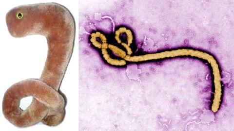 Ebola virus plush toy