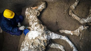 An archaeologist inspects the remains of a horse skeleton in the Pompeii archaeological site.