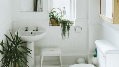 <p>The bathroom isn&#x27;t the first place that springs to mind when thinking about where to put an indoor plant.</p><p>But a splash of colour can do wonders for what is often just a stark space.</p><p>There&#x27;s also the added bonus of our flora friends purifying the air of a bathroom, and contrary to popular belief, there are plants that actually thrive in humid, low-lit areas.</p><p>So grab some of the below varieties, run a bath, and sit back in lush, luxury.</p>