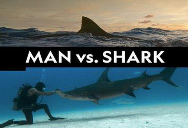 Man vs Shark