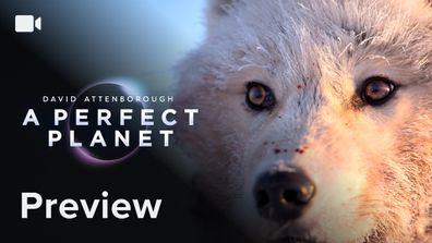 PREVIEW: David Attenborough's A Perfect Planet