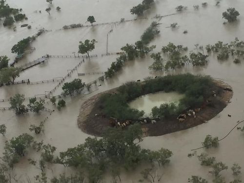 MP Robbie Katter shared a photo from a farmer who swap in floodwaters to get his cattle to safety- but now fears they'll starve.