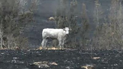 Home and livelihoods lost in bushfires north of Brisbane