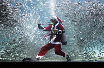 Spare a thought for this South Korean diver dressed in a Santa suit to swim with sardines at the Coex Aquarium. (Chung Sung-Jun/Getty)