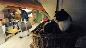 A cat rests in the basement of the State Hermitage Museum in St. Petersburg on October 14, 2015. The Hermitage's cats guard the museum's artworks from mice.