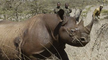 South Africa has won international approval to nearly double to number of rare black rhinos that can be killed in the country each year by trophy hunters.