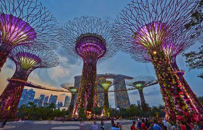 Singapore supertrees at night