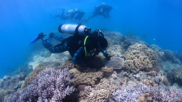 Researchers check corals for signs of spawning.