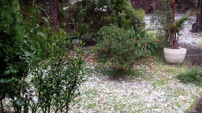 Hail in a Scoresby garden. (Lyle Williams)