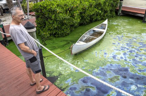 John Emery observes his canoe floating on an accumulation of blue-green algae at Prosperity Pointe, in the Caloosahatchee Riverâ€'s mouth in Fort Myers, Florida. Picture: AP
