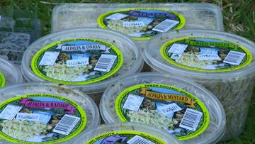 Salmonella outbreak linked to alfalfa sprout products