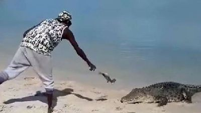 Man caught teasing crocodile with fish 'asking for trouble'