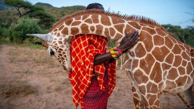 'Guardian Warriors' - Reteti Elephant Sanctuary, Kenya: Photo Story Coexistence category 2020 winner.