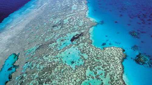 The reef was also recently affected by Cyclone Debbie.