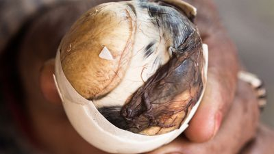 2. Balut (Duck foetus egg) - Duck foetus boiled and eaten bones and all.
