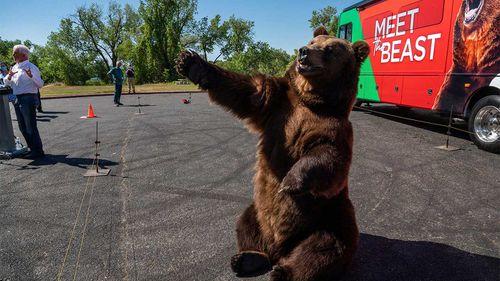 Tag the Kodiak bear.