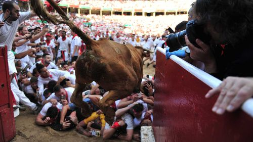 A heifer jumps over daredevils during the Pamplona 'Running of the Bulls'.