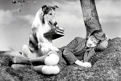 Yep, it's <B>Lassie</B>, the collie who became a global star for frequently rescuing Timmy in the 1950s/60s TV series.
