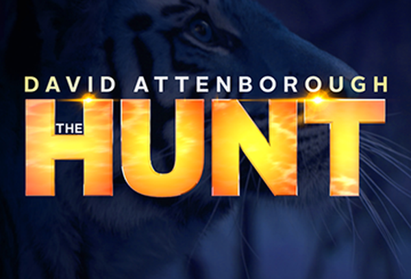 David Attenborough's The Hunt