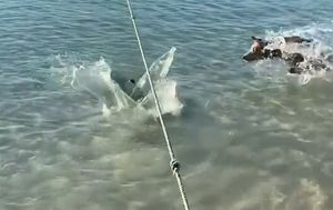 Dog chases off shark swimming near North Queensland beach