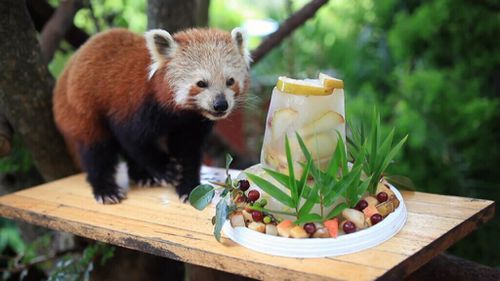 A special cake was prepared for the celebration. (Symbio Wildlife Park)
