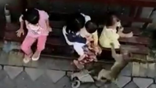 Monkey riding miniature bike attempts to steal child in broad daylight