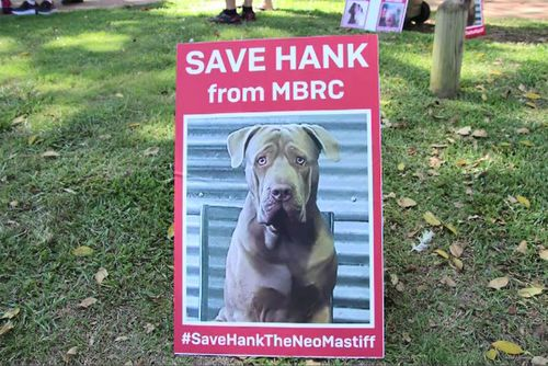 Hank's owners launched a successful campaign to save his life.