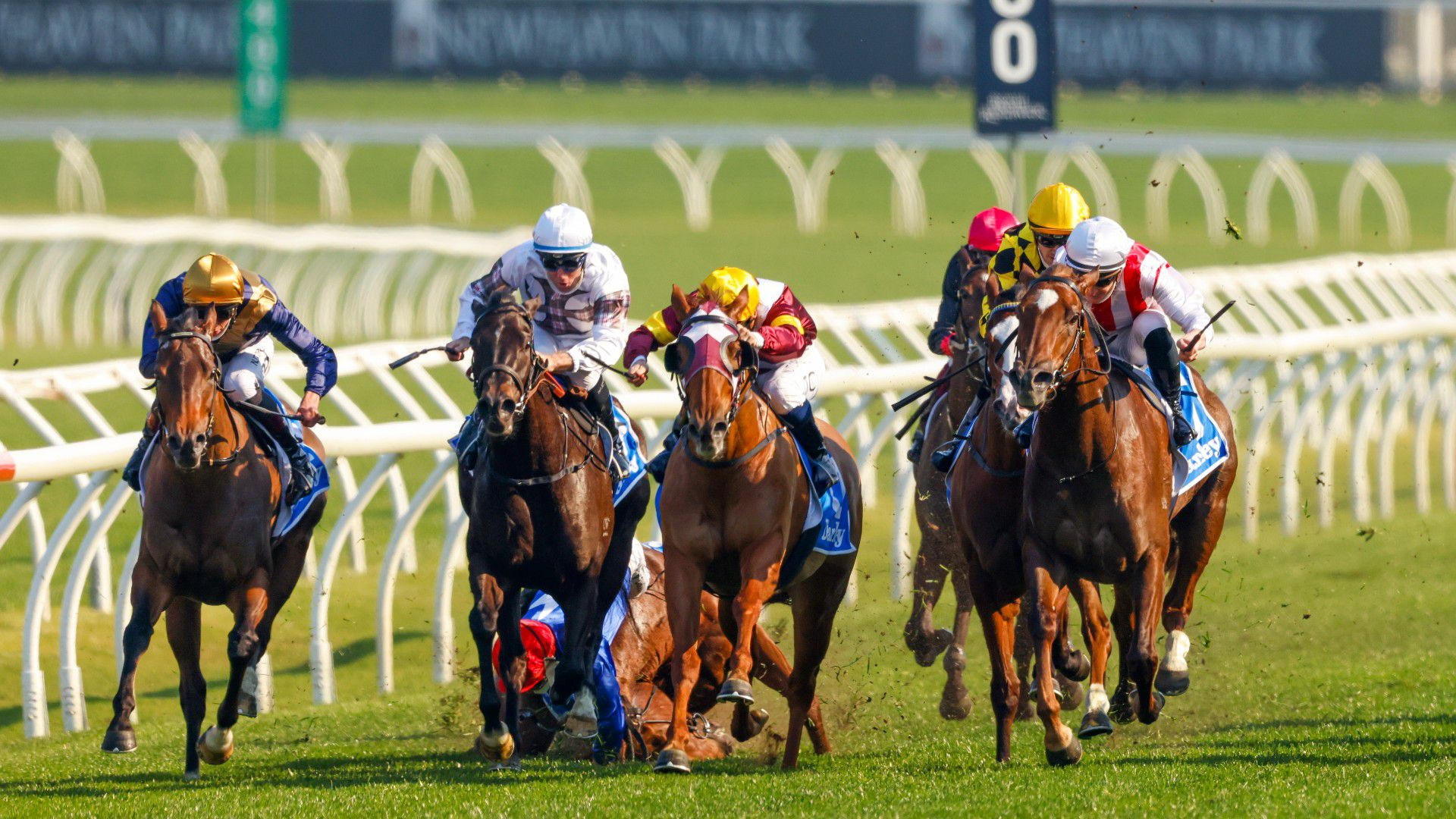 Horse euthanised and jockey in hospital after fall at Royal Randwick