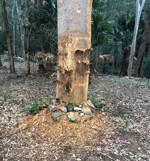 A memorial tree dedicated to Matt has been stripped bare. (Mark Leveson/Twitter)