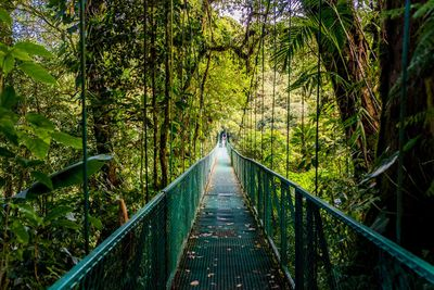 12. Monteverde Cloud Forest Reserve, Costa Rica