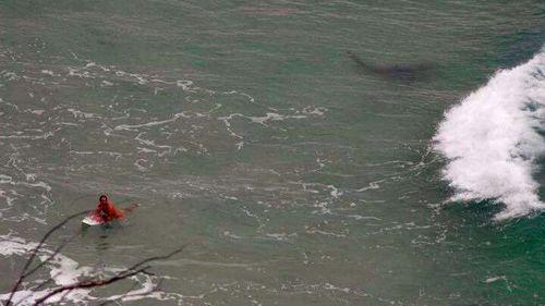 Shark snapped stalking surfer off Queensland coast