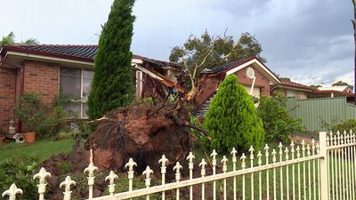 Felled trees crushed houses and fences in Mt Druitt