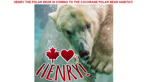 The Cochrane Polar Bear Habitat in Ontario are clearly excited to welcome Henry, posting this picture to their website's homepage. (Cochrane Polar Bear habitat)