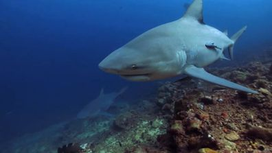 Sharks Among Us sees one scientist look for a way for sharks and humans to co-exist